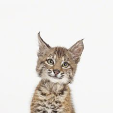 I love, love, love the baby animal prints by Sharon Montrose! Gorgeous!!