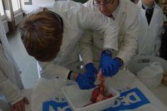 Prácticas de biología: Los alumnos de 2º de secundaria están haciendo prácticas de biología en los laboratorios del colegio este trimestre.