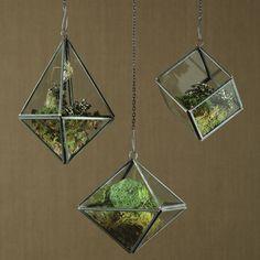 Cool 38 Perfect Diy Terrarium Design Ideas That Inspire You