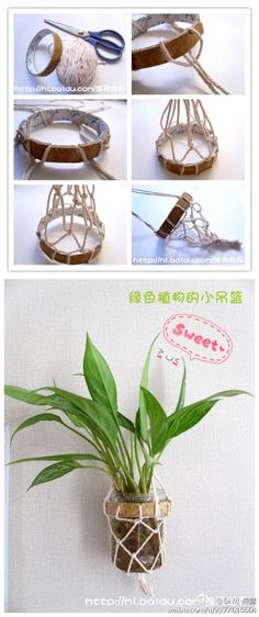 Double-sided adhesive tape ring produced a small basket, into the green plants, environmentally friendly and fresh ~