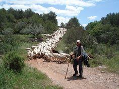 Shepherd, Trashumancia, Msdrid, Spain.