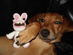 chien et petit lapin crétin