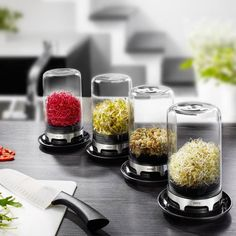 The innovative miniature greenhouse with its integrated ventilation provides the perfect climatic conditions to cultivate fresh sprouts for salads etc. in your own kitchen. Mini Serre, Miniature Greenhouse, Sprouting Seeds, Mung Bean, Bean Sprouts, Glass Containers, Healthy Alternatives, V60 Coffee, Cool Lighting