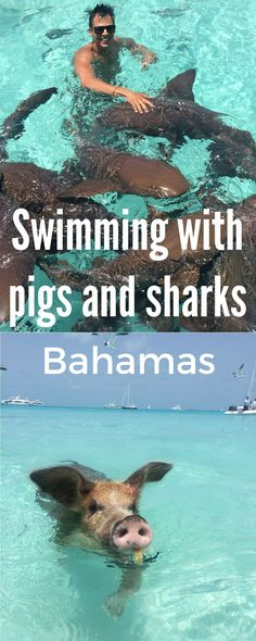 Have you ever thought in your wildest dreams swimming with sharks in an open sea?? Check out my swimming with pigs and sharks adventure in the Bahamas.