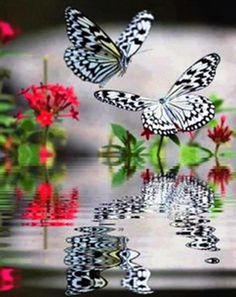 Spiegeling van vlinders in het water