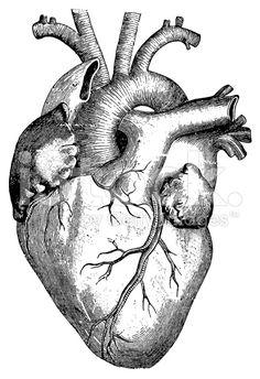 Cœur (isolé sur blanc illustrations libres de droits