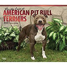 American Pit Bull Calendar 2018 For the Love of American Pit Bull Terriers