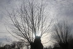 The sun kisses the trees, maybe for the last time this year... some forgotten leaves will testify...