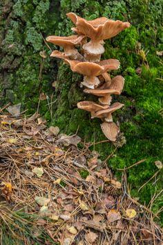 Autumn fungi at Kaapse bossen Doorn, the Netherlands