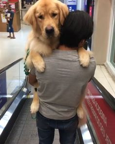 Golden Retriever Discover Cutest video on internet Cute Funny Dogs, Cute Funny Animals, Cute Baby Animals, Animals And Pets, Chien Golden Retriever, Cute Dogs And Puppies, Doggies, Cute Animal Videos, Cute Creatures