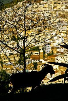 Chefchaouen, Morocco , 2006  by Fabio Nascimento