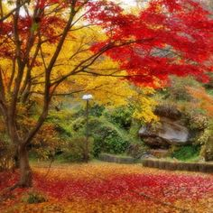 Autumn...love this pic.....