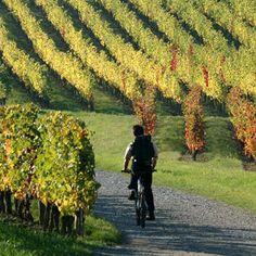 Route in the vineyard