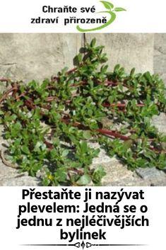Přestaňte ji nazývat plevelem: Jedná se o jednu z nejléčivějších bylinek Gardening, Health, Plants, Medicine, Salud, Health Care, Garten, Lawn And Garden, Planters