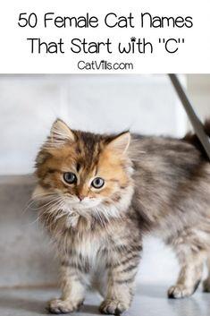 100 Cat Names That Start With C Catvills In 2020 Cat Names Cute Cat Names Kitten Names