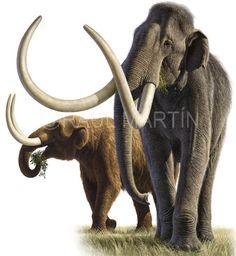 Raúl Martín: Mastodon & Mammuth