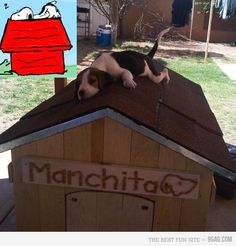 The real snoopy! Too cute lol