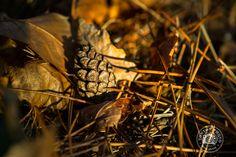 8 conseils pour photographier l'automne, ses couleurs