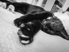 Dreaming of Superman Cat Sleeping, Have A Laugh, Superman, Cats, Funny, Animals, Gatos, Animales, Animaux