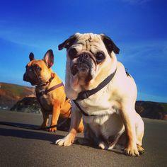 Celebrating National #Pugtober Day  with  D'weez! Love you man!! #puglove #nationalpugday #loveyourdog #doglover #brawbar #puppiesofinstagram #pugslife #dogdays #mauipug #islandpug by brawbar