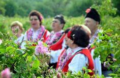 Bulgarian rose picking