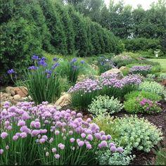 allium, geranium, sedum, iris