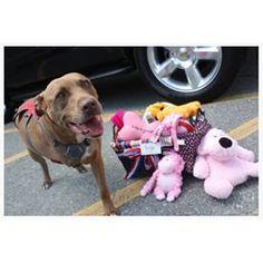 Esta perra, que salvó a su humano de ser golpeado por un tren y, como consecuencia, perdió una pata. | 29 perros que te harán querer hacerlo mejor