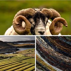 Scotland and Harris Tweed  Ram: Lewis Mackenzie  Landscape/cloth: Ian Lawson