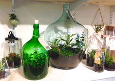 DIY: terrarium maken met Wildernis - Roomed