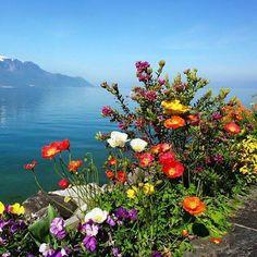 FB My Beautiful Garden and Natural Beauty shared Wonderful World's photo. How Beautiful, Beautiful World, Beautiful Flowers, Beautiful Pictures, Beautiful Places, Beautiful Scenery, All Nature, Science And Nature, Amazing Nature
