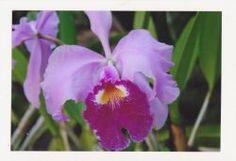 Fotopostkarte-rosa-rote-Orchideen-Bluete