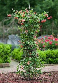 The Toulon Trellis combines art and utility, housing your plants within a beautiful, curved steel framework with clean, contemporary lines- results in a functional work of art for your garden.