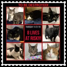 List Of Animals, Cute Animals, Animal List, Staten Island New York, Cat Online, Stop Animal Cruelty, Animal Projects, Maine Coon Cats, Losing A Pet
