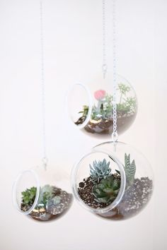 Hanging Planter Made With Plastic Fishbowls