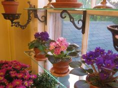 window shelves with house plants and flowers
