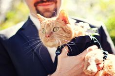Even the cat was dressed up for their wedding! Photo by Roee #minneapolisweddingphotographers