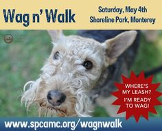 Join The SPCA for Monterey County for the 18th Annual Wag n' Walk on Saturday, May 4, 2013 at Shoreline Park in Monterey and help raise money and awareness for homeless, abused and neglected animals in our community.