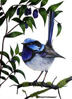 Superb Fairy Wren in Turquoise Berry by Helen Barnard Watercolor Sketch, Watercolor Landscape, Watercolour Painting, Watercolors, Mosaic Birds, Mosaic Art, Owl Art, Bird Art, Pet Birds