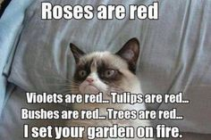 ROSES ARE RED VIOLETS ARE RED... TULIPS ARE RED... BUSHES ARE RED... TREES ARE RED... I SET YOUR GARDEN ON FIRE.