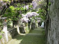 Isole Madre, uno de los más antiguos y bellos jardines botánicos de Italia - Guia de jardin. Aprende a cuidar tu jardín.