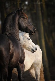 I ride because I have dreams yet to live. I ride because I have dreams yet to have and what exactly they will be tomorrow I cannot say…but always there will be the horses. http://www.annabelchaffer.com/categories/Equestrian-Gifts/