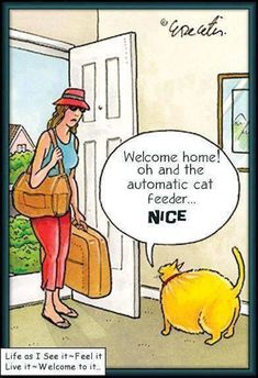 Cat Humor… A Kitty Really Likes the Automatic Cat Feeder