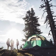 Camping with friends in the fresh air. Nothing beats a fresh forest morning.