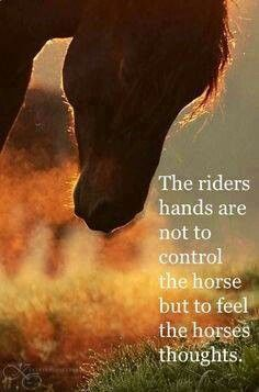 Too true. Too many people pull on their horses mouth and hurt them then wonder why the horse won't accept the bit too easy. Xx