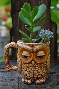 I love Jade Plants ! Succulents and an owl! Garden Planters, Succulents Garden, Owl Mug, Jade Plants, Pot Plants, Owl Always Love You, Owl Crafts, Little Plants, Cute Owl