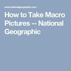 How to Take Macro Pictures -- National Geographic