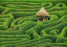 Laurel Maze at Glendurgan Gardens, Cornwall, England