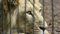 Hunters Say Trophy Hunting Helps Animals. Here's Why They're Wrong.