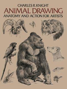 Animal drawing charles knight