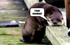 funny otters | otter funny - Animal Humor Photo (20223896) - Fanpop fanclubs